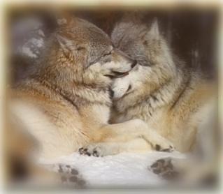 highl and werewolf wedding spear terry